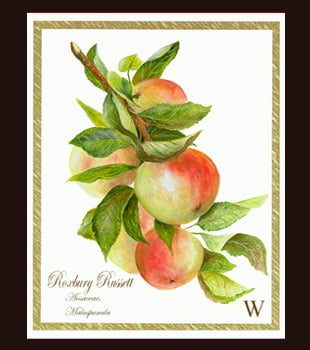 Roxbury Apples - 8 X 10 oil on acid free specialized paper